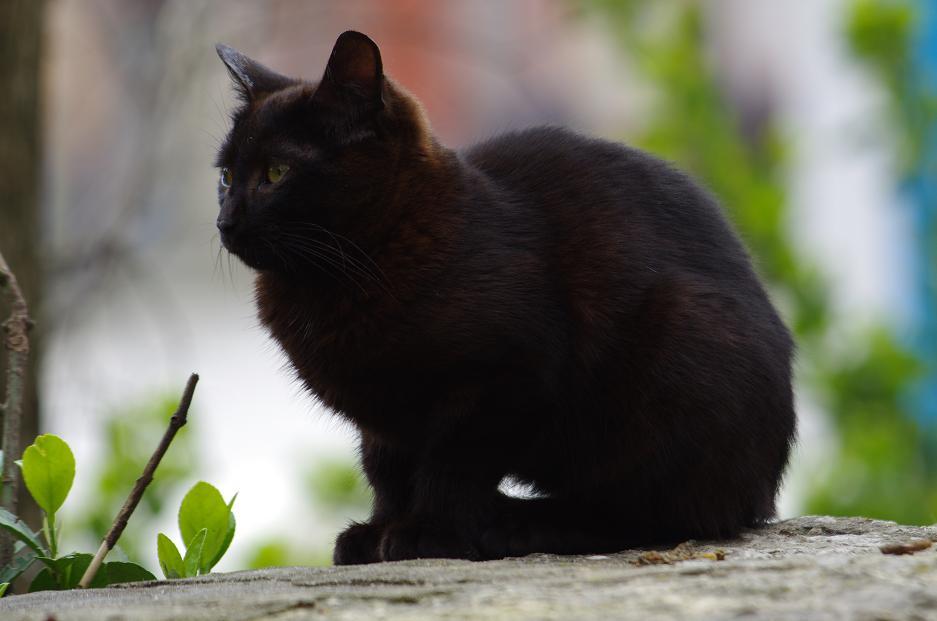 """фото """"Черна котка"""" метки: природа,"""