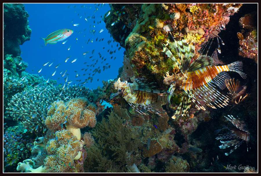 "photo ""In the shade of coral"" tags: underwater,"