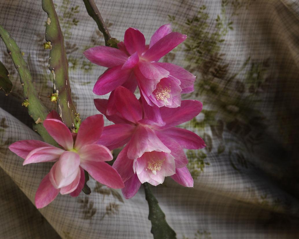 """фото """"Сеть для цветущих"""" метки: природа, жанр, цвет кактуса"""