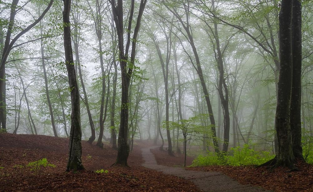 "фото ""Светло-зеленая вуаль"" метки: пейзаж, Кавказ, весна, лес"