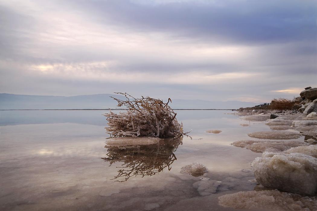 "photo ""Перекати-поле"" tags: landscape,"