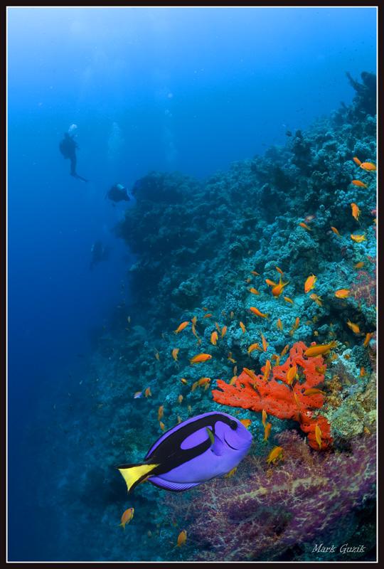 """фото """"Палитра моря"""" метки: подводные,"""