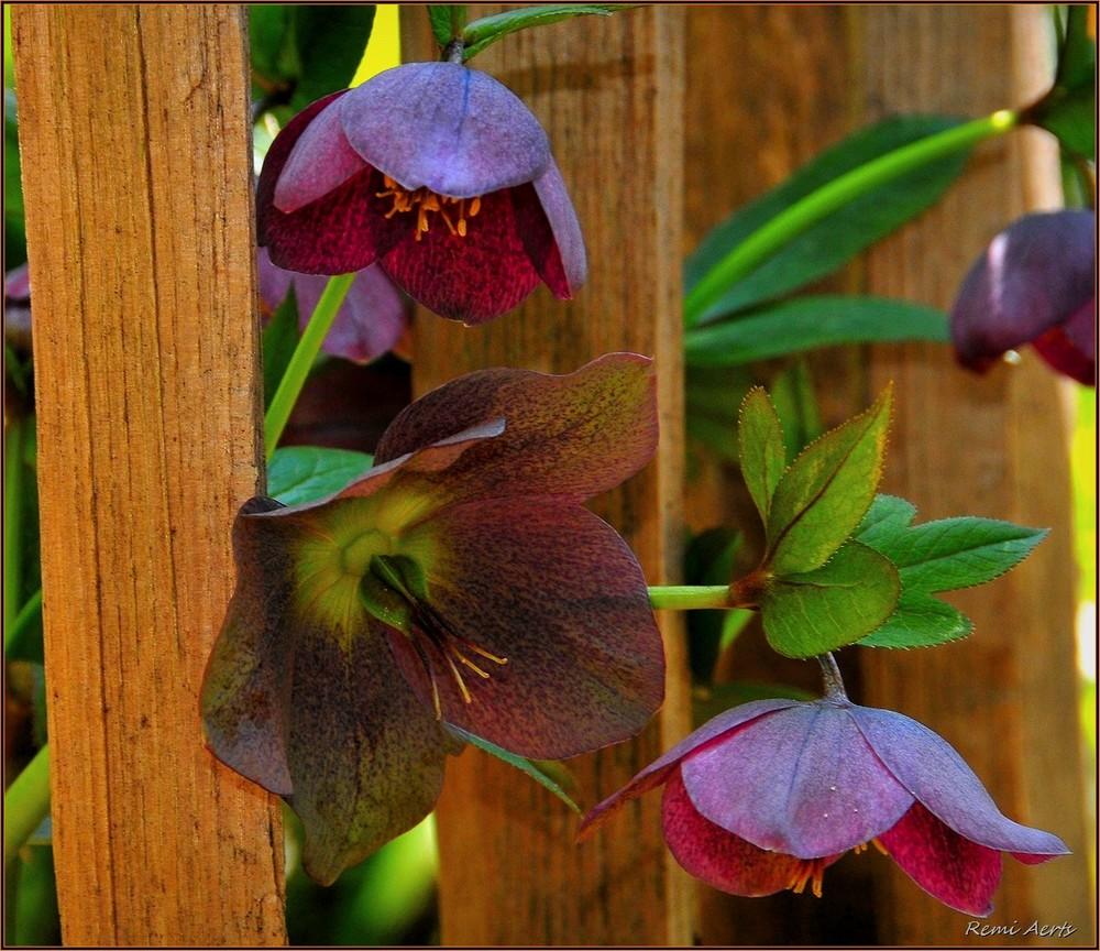 "photo ""***"" tags: macro and close-up, nature, fragment,"