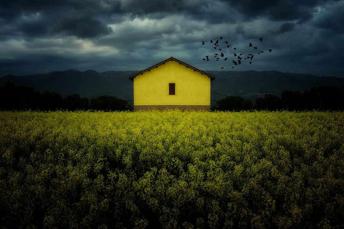 """фото """"yellow on yellow"""" метки: пейзаж,"""
