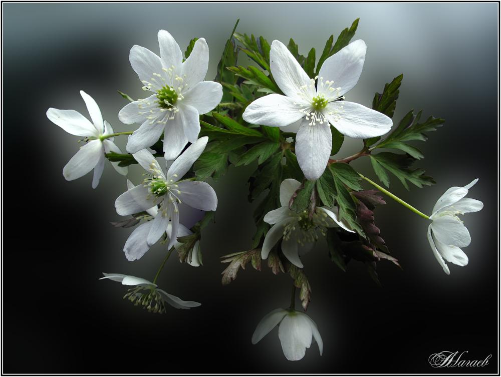 "photo ""***"" tags: nature, macro and close-up, spring, Макро крупным планом, лес цветы"