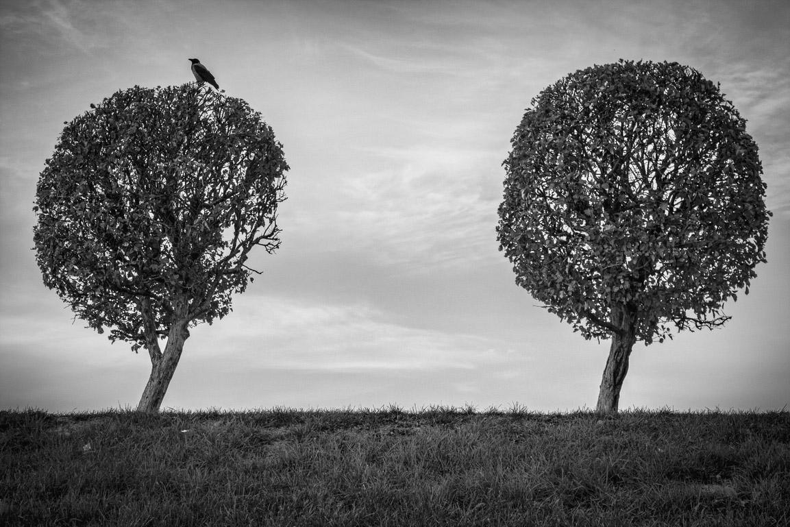 "photo ""guard gate"" tags: misc., black&white, landscape, bird, tree, Петергоф, Петродворец, ворона, деревья"