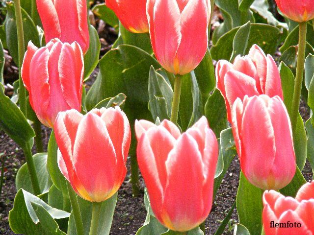 "фото ""Spring time"" метки: природа, Europe"