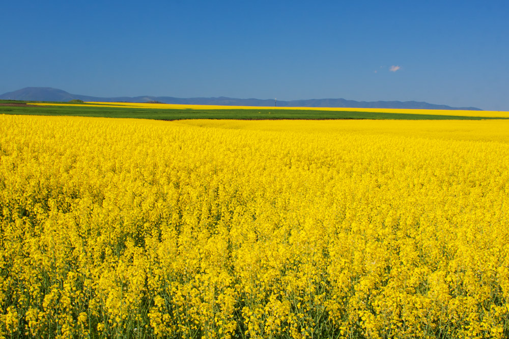 "photo ""***"" tags: landscape, field"