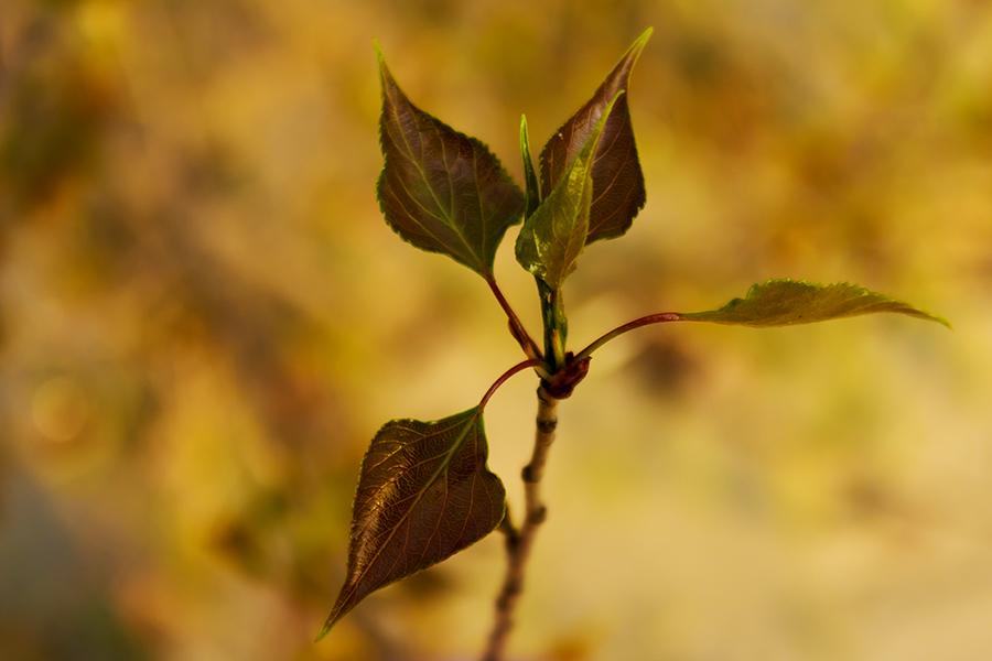 """фото """"Весенняя"""" метки: природа, макро и крупный план, апрель, лист"""