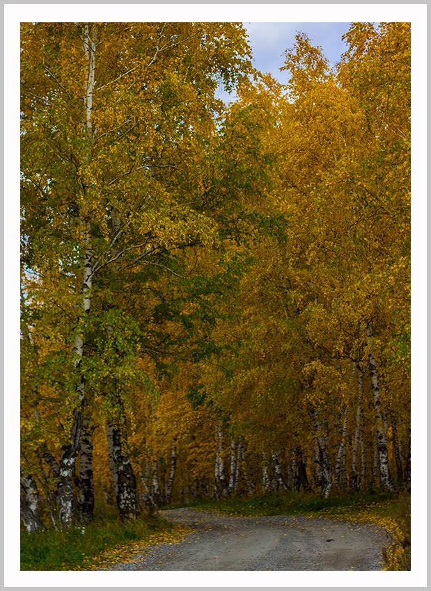 """фото """"Лесной дорогой к сбору урожая 2012"""" метки: пейзаж, Красноярский край, деревья, лес, лесная дорога"""