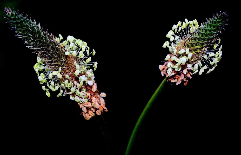 "photo """"Simplicity..."""" tags: nature, macro and close-up,"