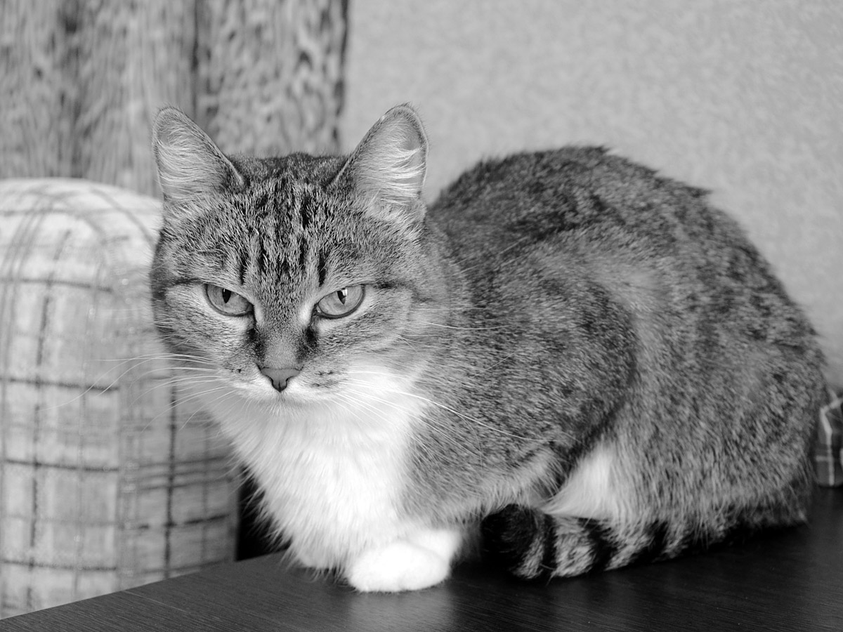 "фото ""Коша"" метки: черно-белые,"