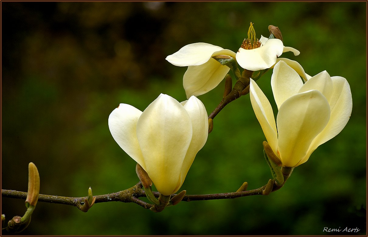 """фото """"***"""" метки: природа, макро и крупный план, фрагмент, spring"""