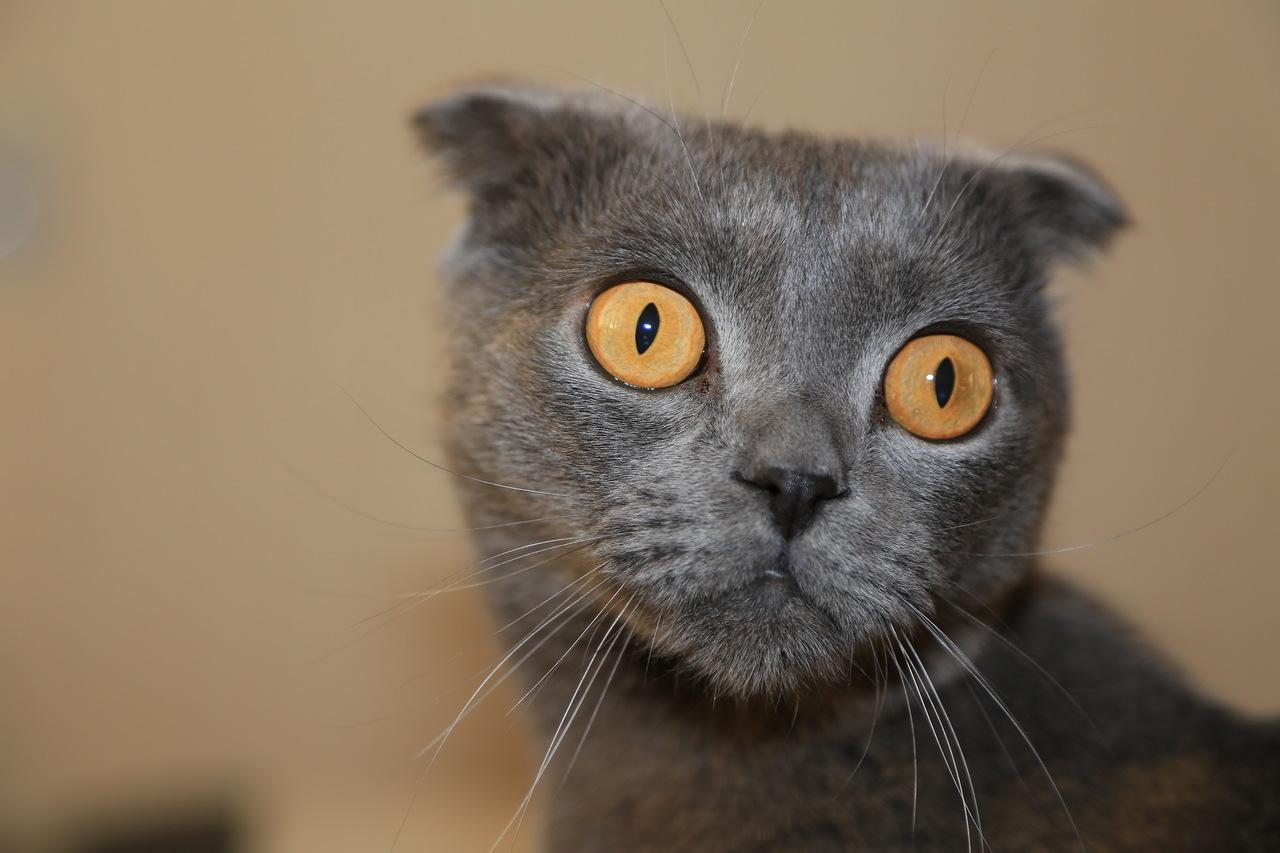"""фото """"Опаньки"""" метки: природа, разное, животные, кот, кошка"""