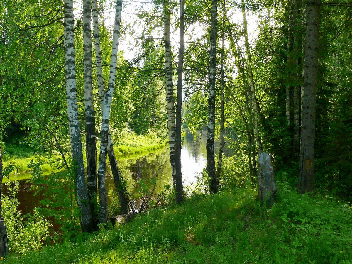 """фото """"березки"""" метки: пейзаж, природа,"""