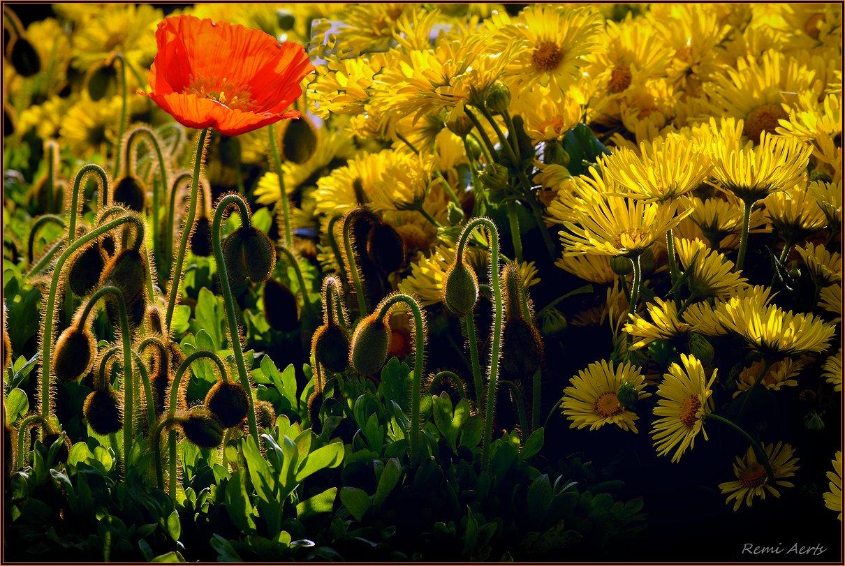"""фото """"***"""" метки: макро и крупный план, природа, фрагмент, spring"""