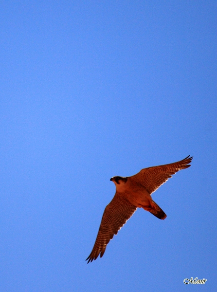 "photo ""Inspired"" tags: nature, travel, misc., Africa, birds, eagle, falcon, wild animals"