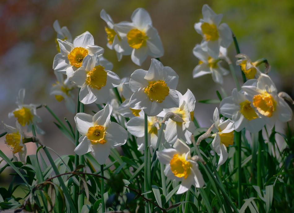 "фото ""Spring"" метки: природа, spring, цветы"
