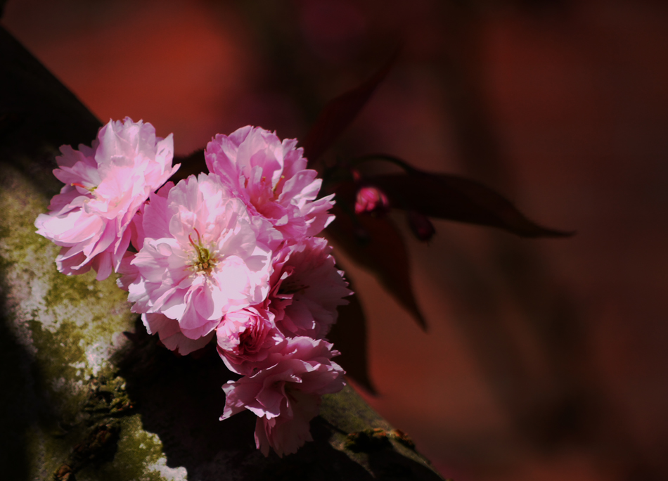 "photo ""Pink Blossom"" tags: nature, blossom, spring"