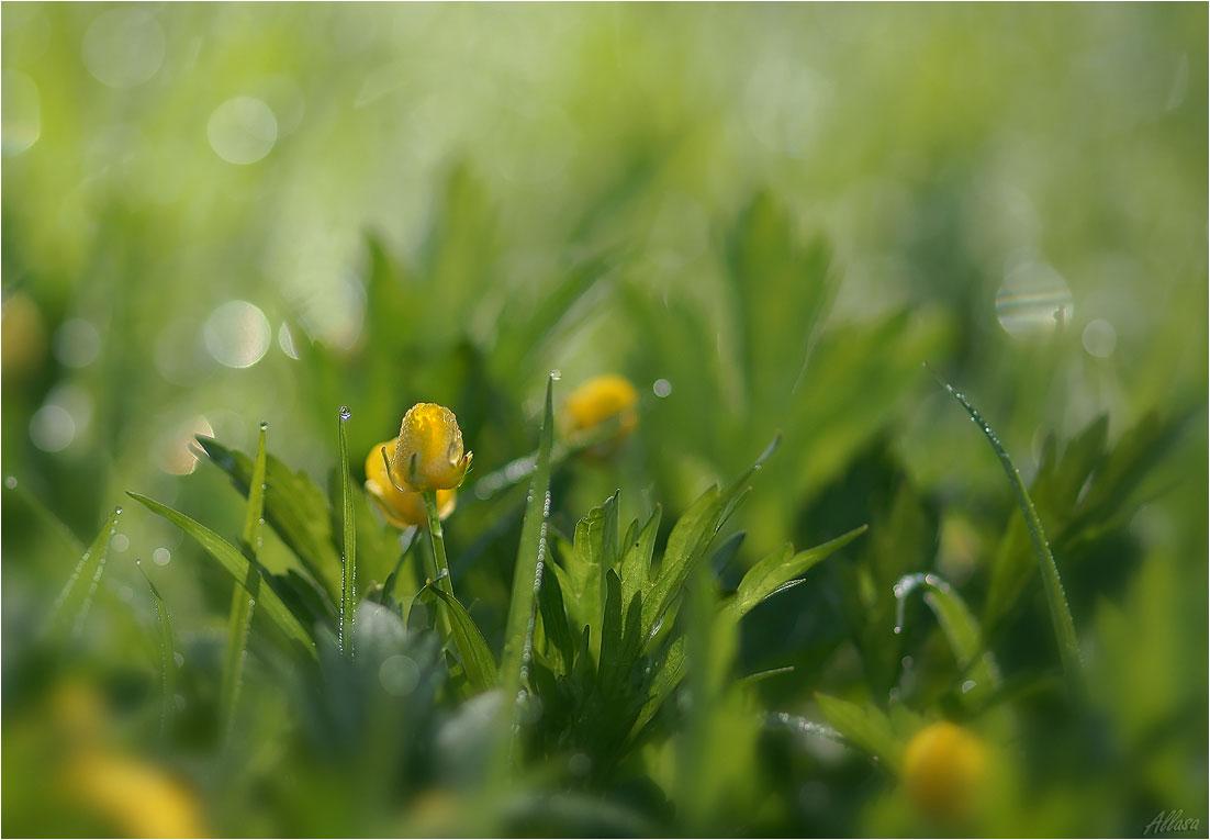 """фото """"Мир росинок"""" метки: природа, макро и крупный план,"""