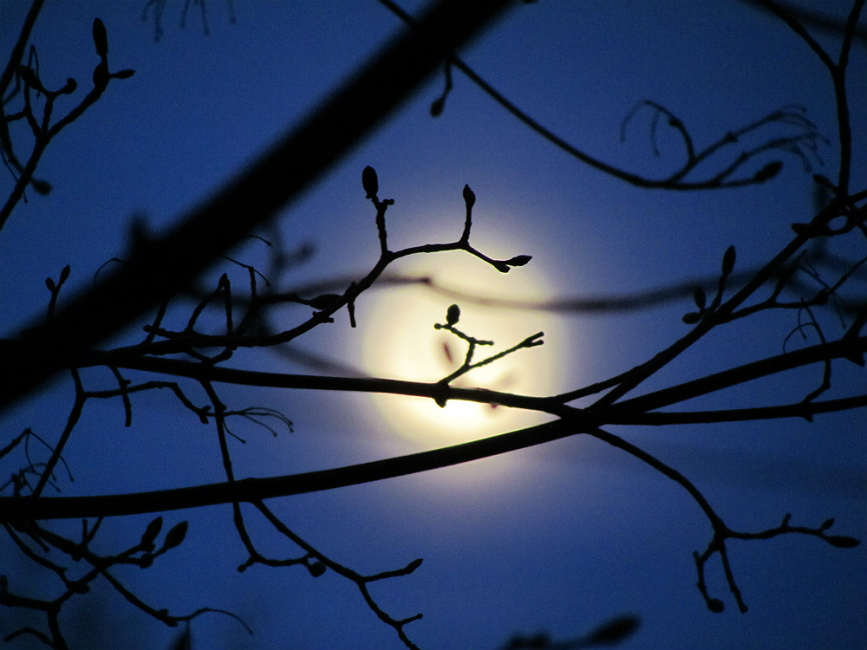 "photo ""decreasing moon"" tags: landscape, nature, fragment, Moon"