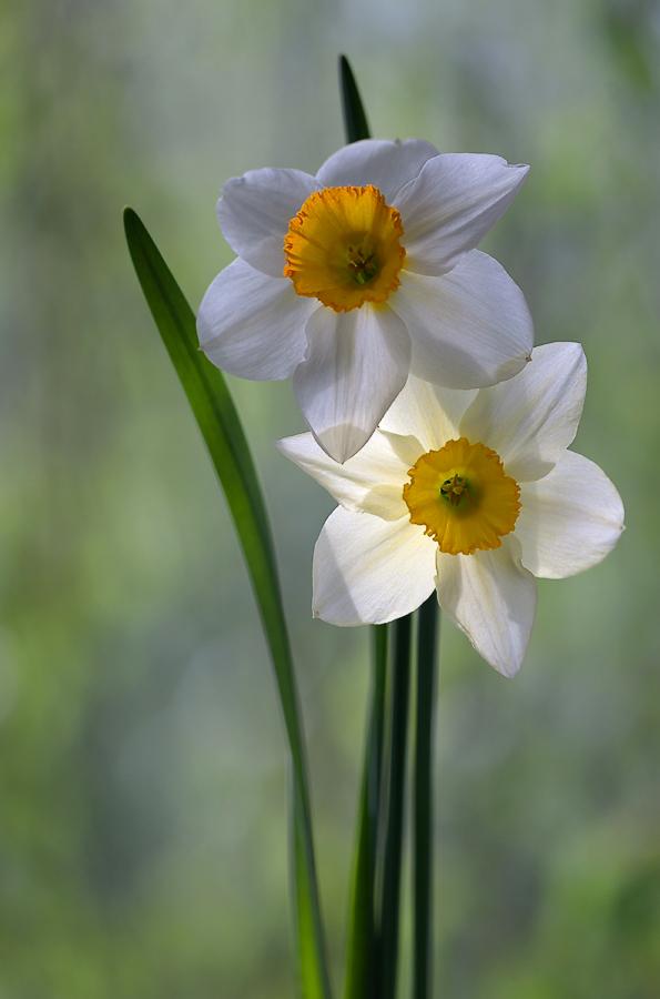 """фото """"первомайские"""" метки: природа, весна, солнце, цветок, цветы"""