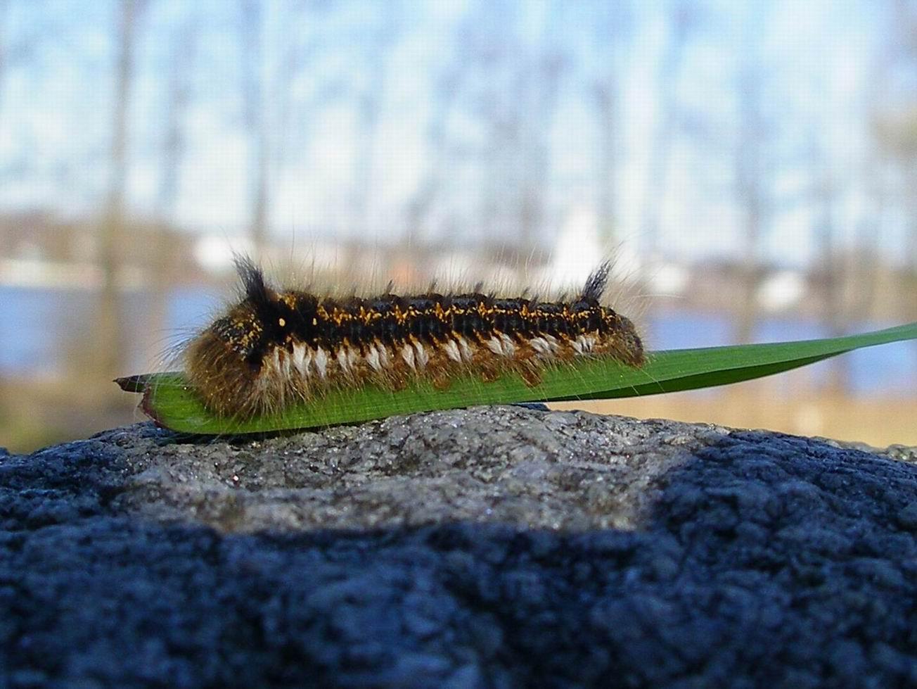 """фото """"Майская красавица"""" метки: макро и крупный план, природа, насекомое"""