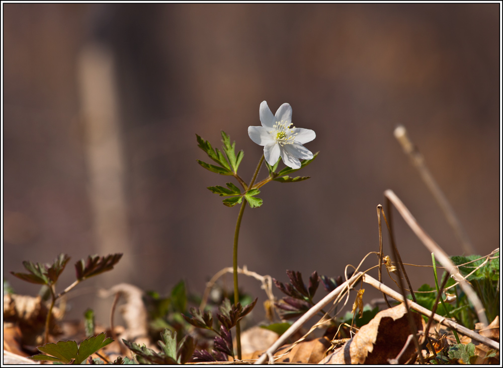 """фото """"***"""" метки: , весна, лес цветы"""