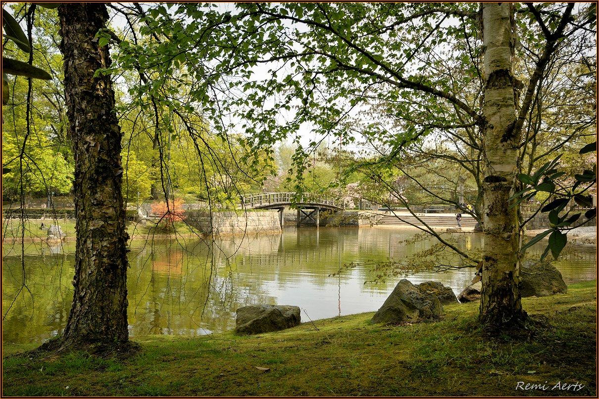 """фото """"***"""" метки: пейзаж, природа, репортаж, spring, вода, цветы"""