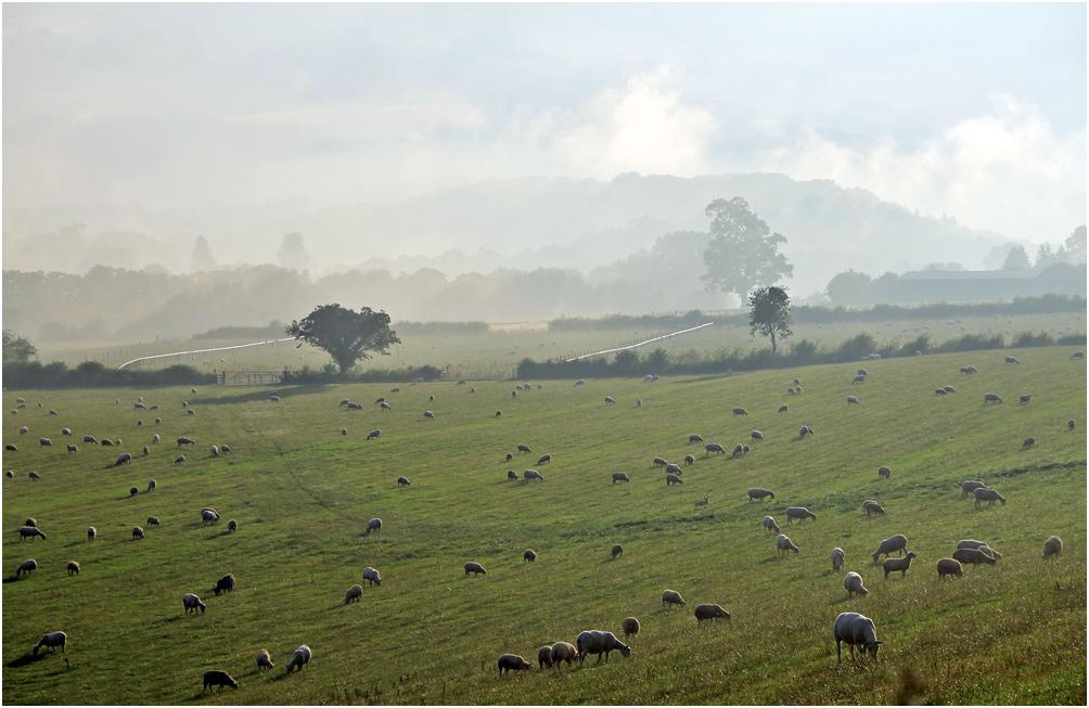 """фото """"Со Светлым Христовым Воскресением всех!"""" метки: природа, пейзаж, дерева, овцы"""