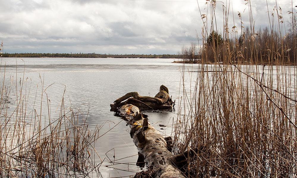 "фото ""Весеннее купание"" метки: природа, пейзаж,"