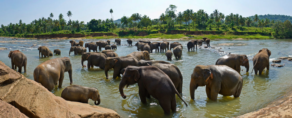 "фото """"На водопое"""" метки: панорама, природа, путешествия, вода, дикие животные"