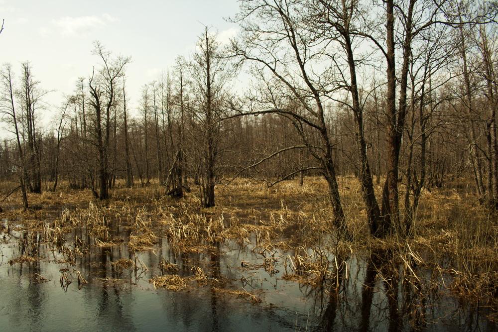 """photo """"Водяной"""" tags: landscape,"""