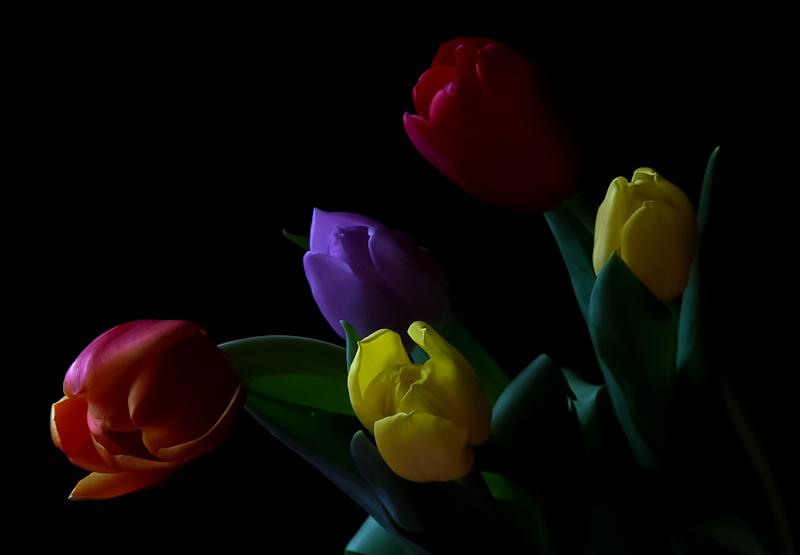 """фото """"tulips"""" метки: макро и крупный план, цветы"""