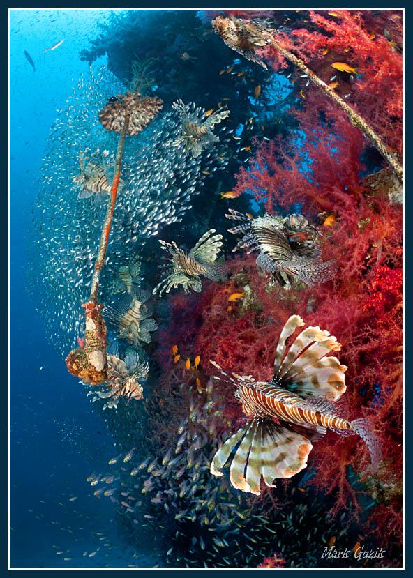 """фото """"Облетая владения"""" метки: подводные,"""