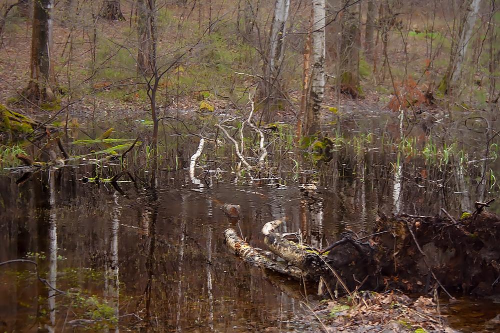"""фото """"Найдите уточку"""" метки: пейзаж, природа, весна, вода, дикие животные"""