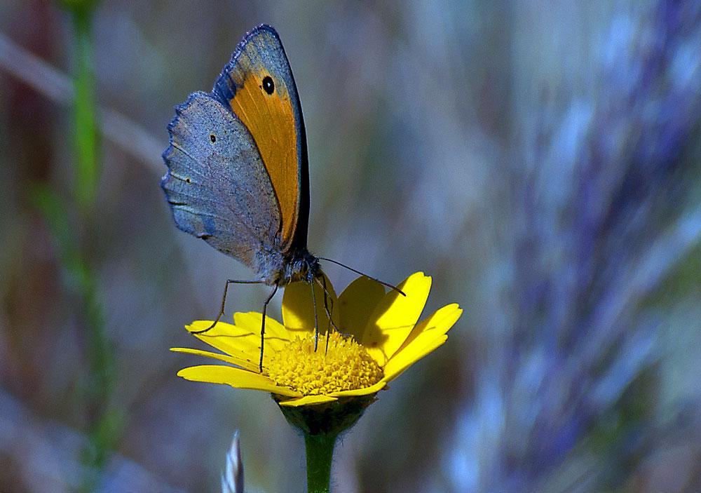 """фото """"Summer Time"""" метки: природа, макро и крупный план, разное, Europe, portugal, river Tagus, river Tejo, насекомое"""