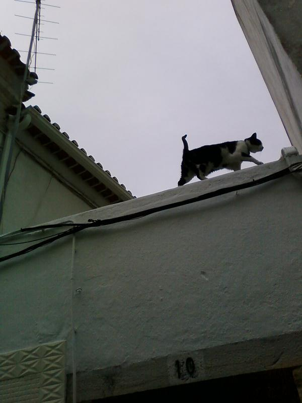 "photo ""The cat: Torres Vedras roof  (hihihi)"" tags: street, Torres Vedras, roof"