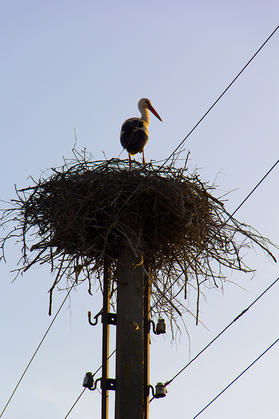"photo ""Stork"" tags: nature, travel,"