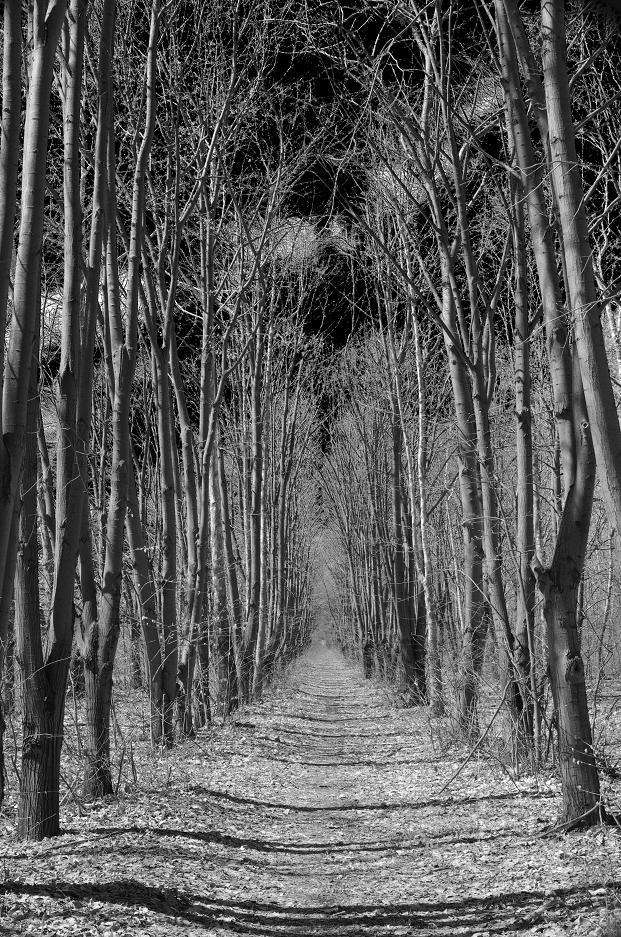 """фото """"Път безкраен"""" метки: пейзаж,"""