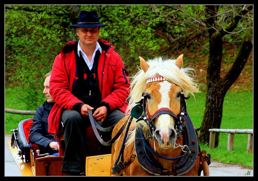 "фото ""When the trap, when the gallop"" метки: разное,"