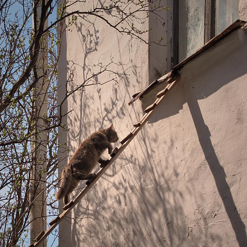 """фото """"Весной, домой..."""" метки: ,"""