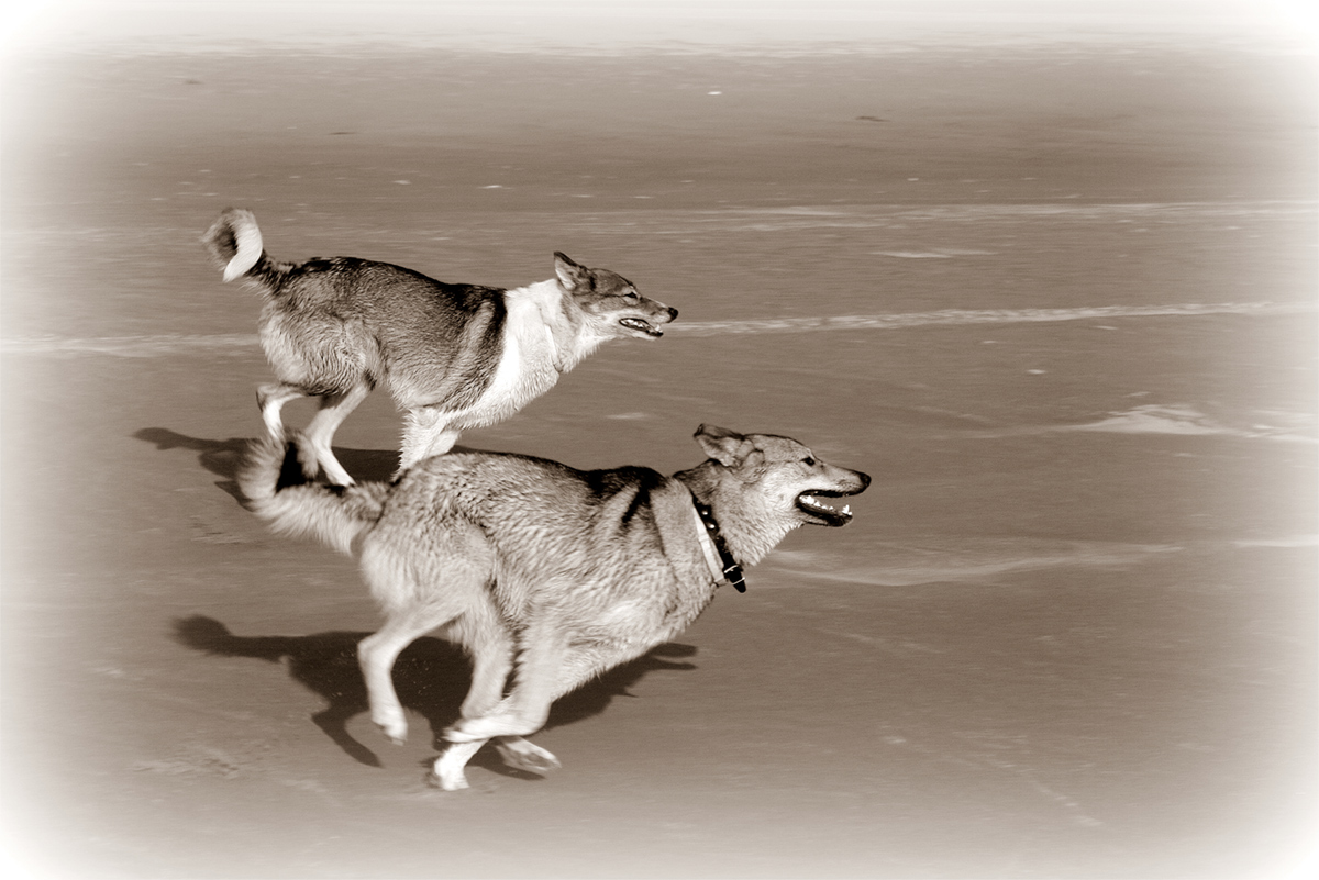 "photo ""Competing!"" tags: black&white, genre, nature, Лайки."