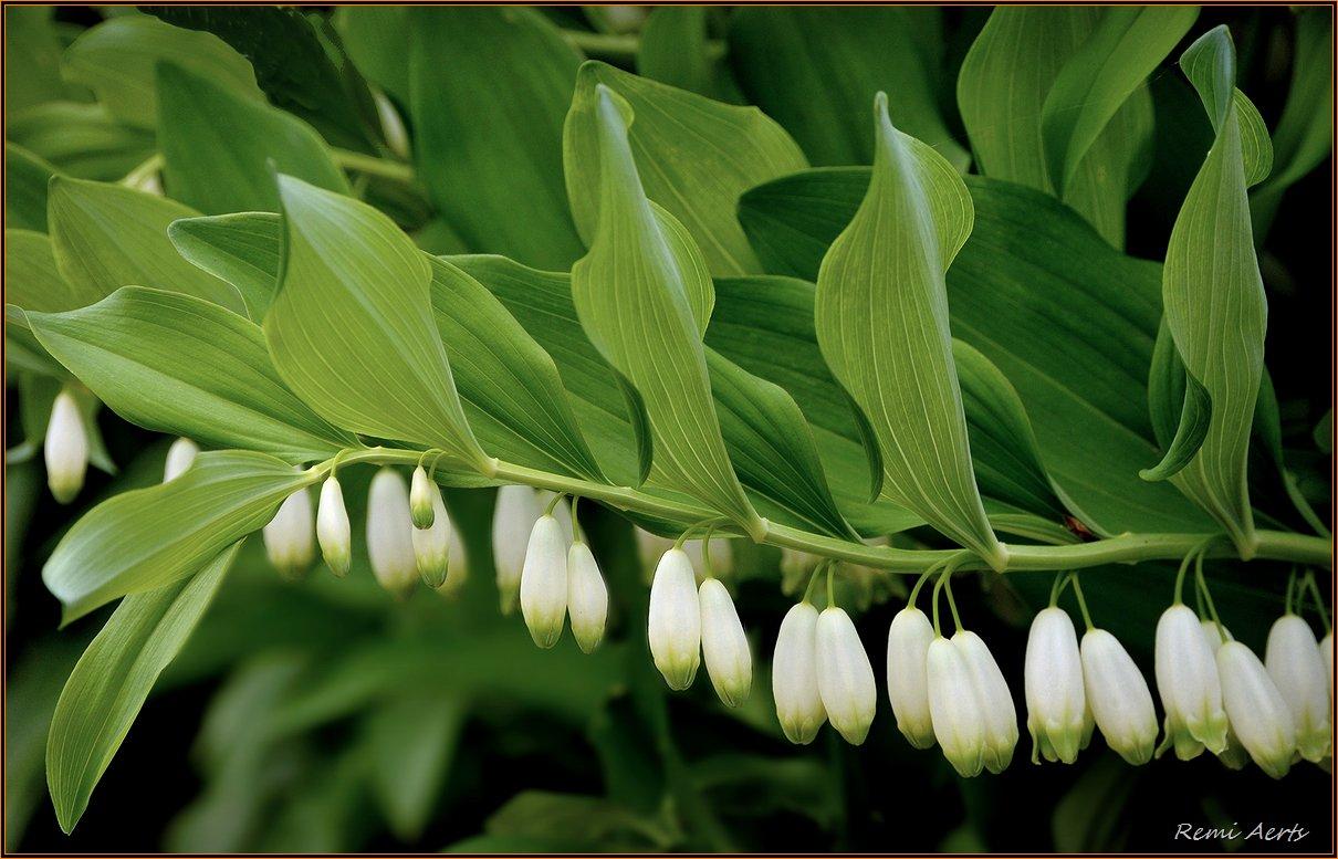 """фото """"***"""" метки: природа, фрагмент, макро и крупный план, spring, цветы"""
