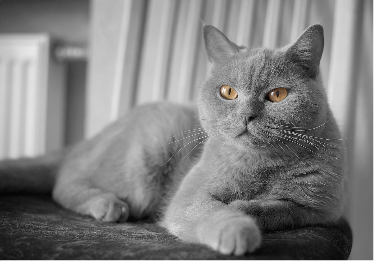 """фото """"May Cat Chik"""" метки: разное, домашние животные"""