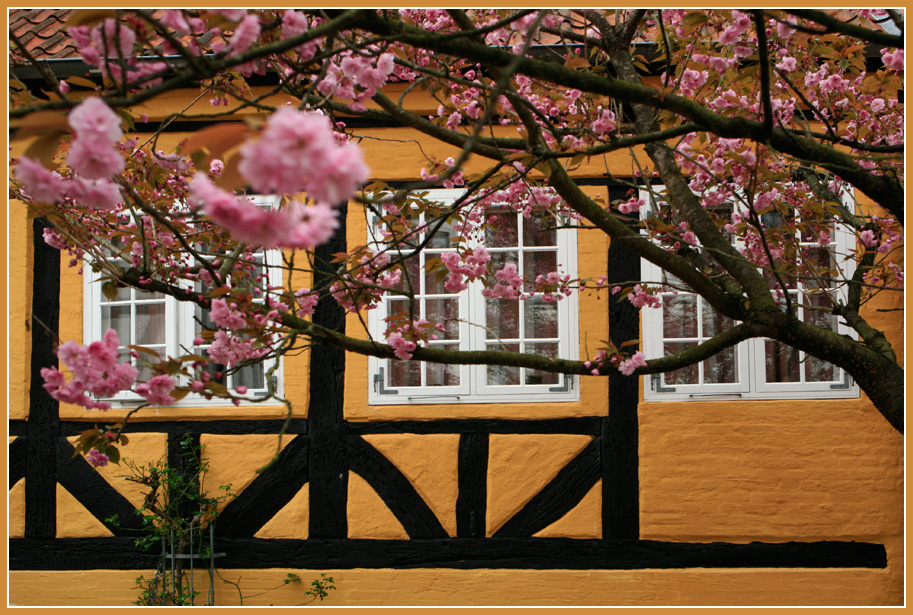 "photo ""spring everywhere"" tags: nature, city, blossom, spring, timbered house, tree"