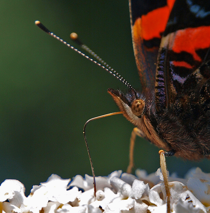 "photo ""Dig In"" tags: nature, macro and close-up, reporting,"
