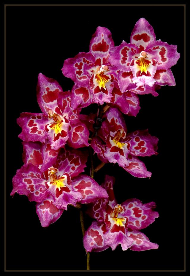 "фото ""Happy Mother's Day"" метки: природа, spring, Южная Америка, цветы"