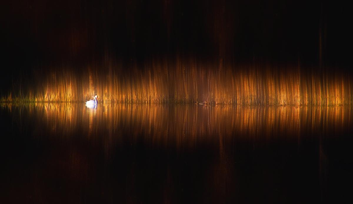 "photo ""Euphony of light"" tags: ,"