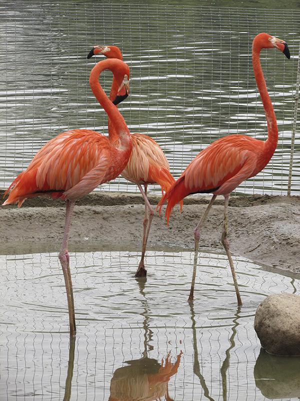 """фото """"Огненные птицы"""" метки: природа,"""